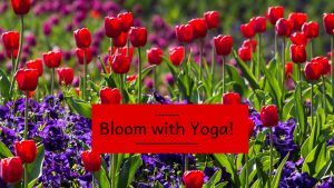 Red and purple violets for a Yoga event